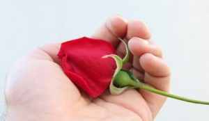 Living rose